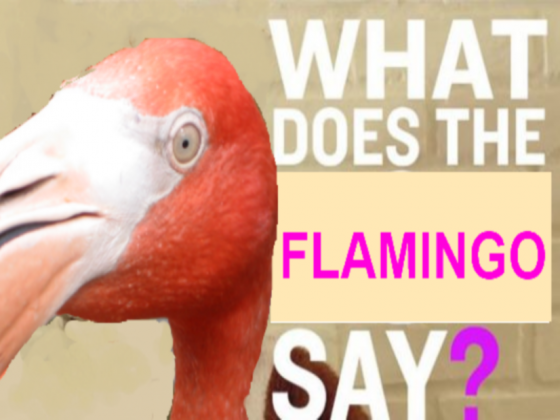 What does the Flamingo say 1